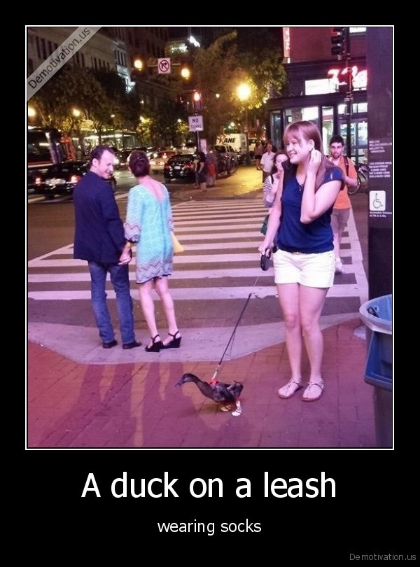 A duck on a leash