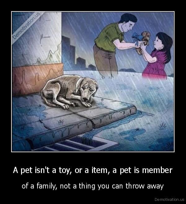 A pet isn't a toy, or a item, a pet is member