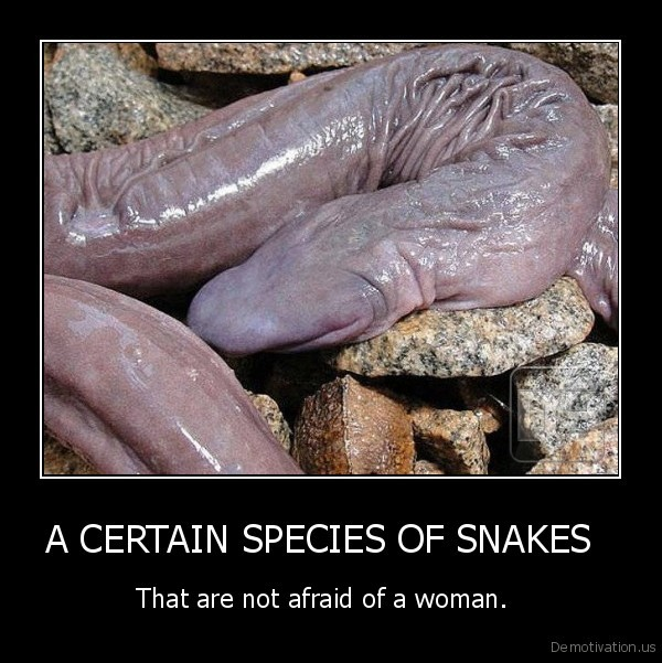 A CERTAIN SPECIES OF SNAKES