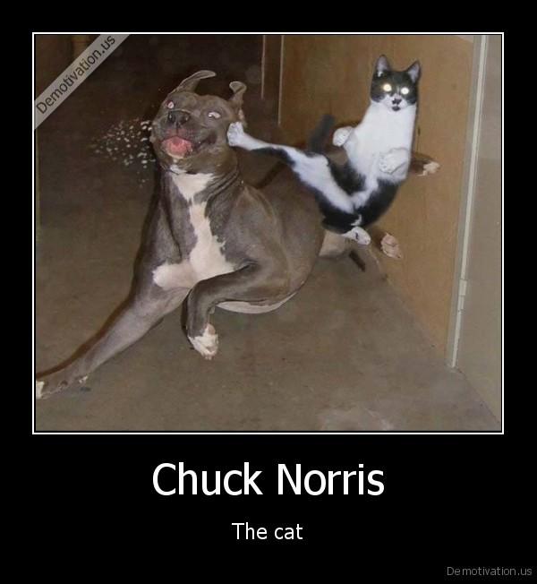 Chuck Norris - Images