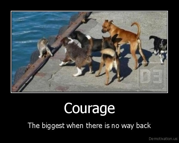cat,kitten,dog,brave,danger