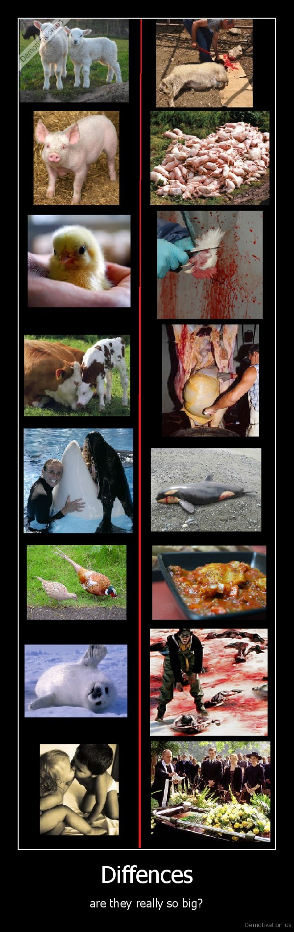 meat,flash,eating,food,vegetarian,vegetables,diffrences,death,life,kill