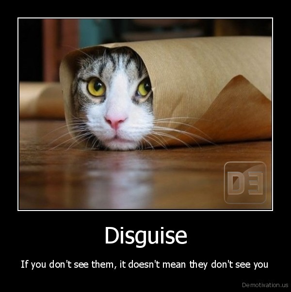 cat,kitten,disguise,visible,hide,see