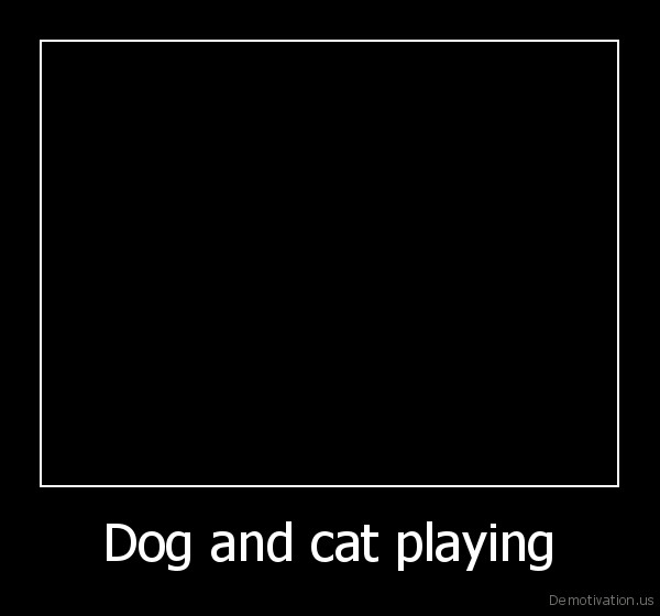 animals,dog,cat,funny