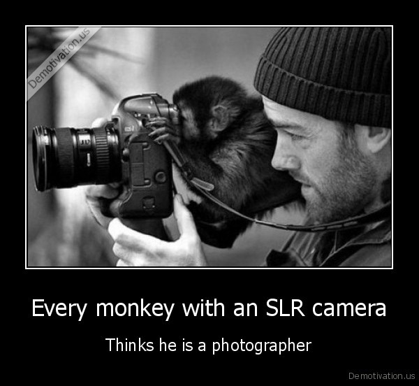 Every monkey with an SLR camera