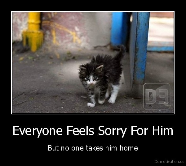 cat,kitten,homeless,feel, sorry
