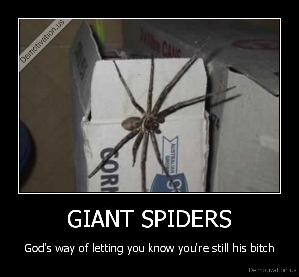 spiders,scary,big,god