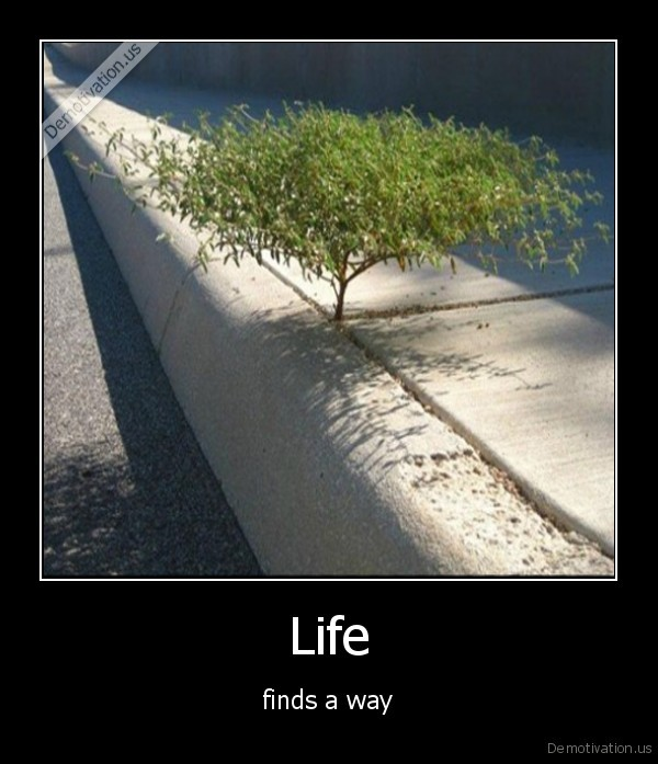life,way,finds,true,quote,sad,nice,awesome