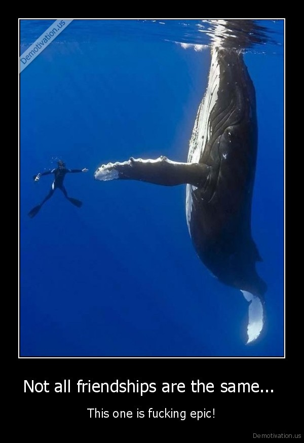 whale,epic,handshake,swimmer,friend,water,cool,awesome
