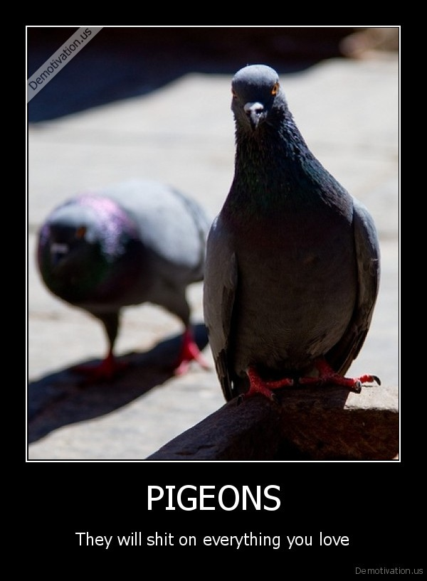 [Image: demotivation.us_PIGEONS-They-will-shit-o...925691.jpg]
