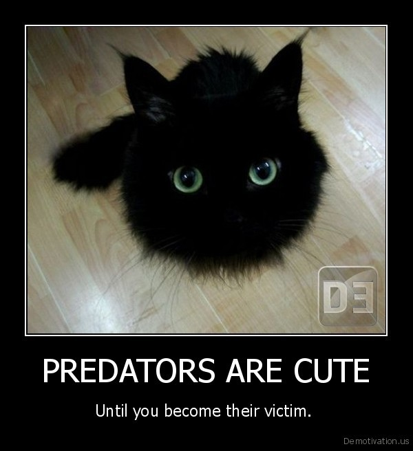 PREDATORS ARE CUTE