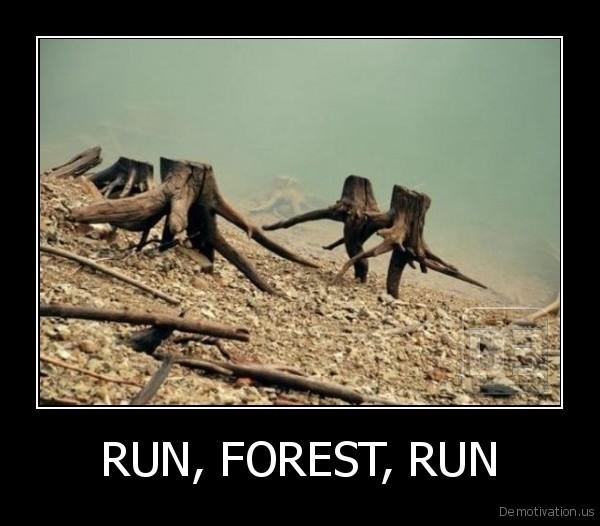 RUN, FOREST, RUN -