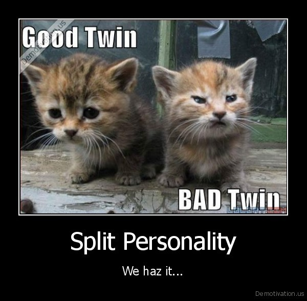 cats,kittens,funny, cat,funny, kitten,good, twin,bad, twin