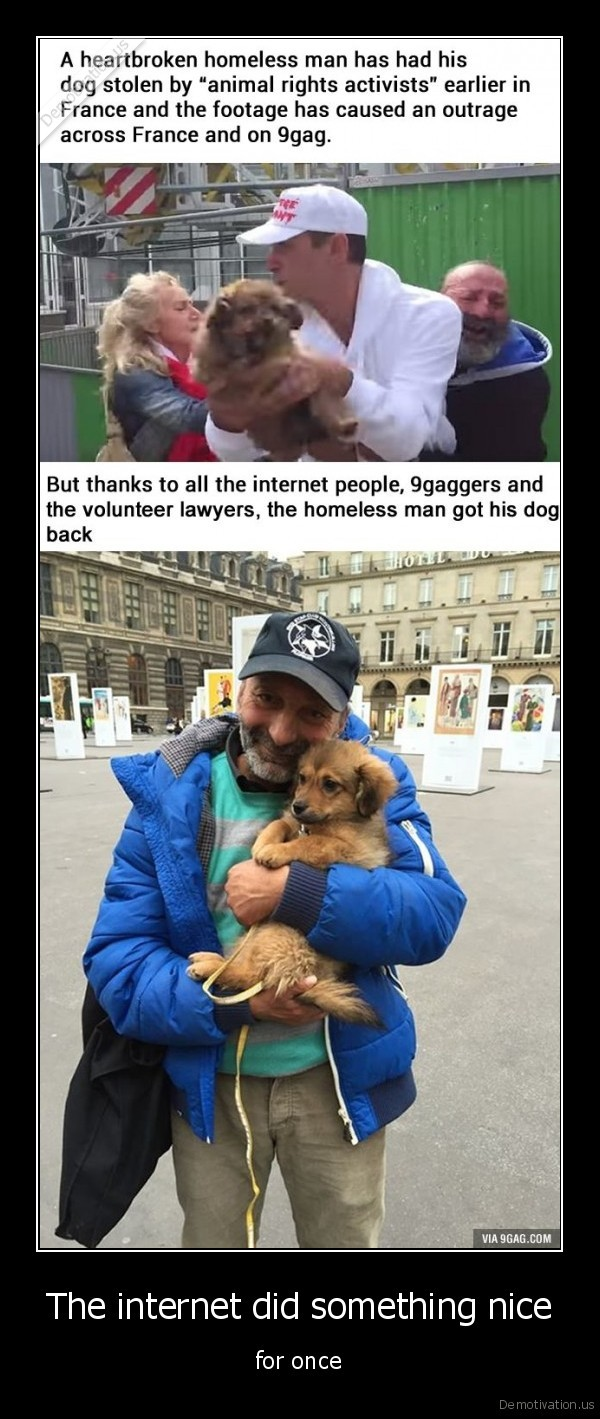homeless, dog