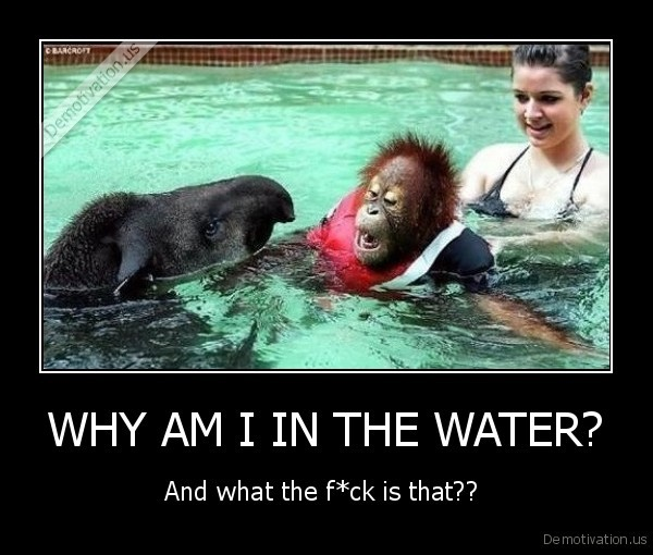 WHY AM I IN THE WATER?