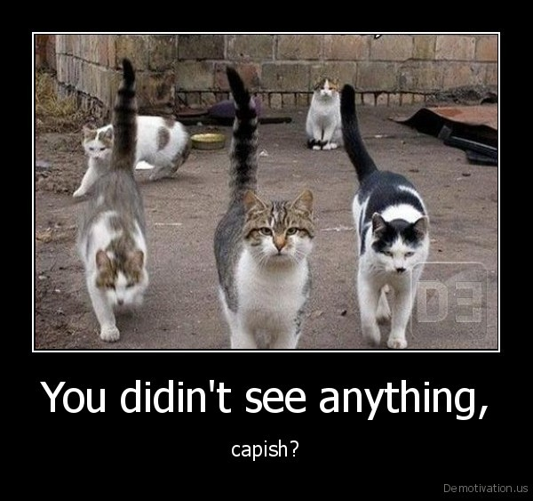 You didin't see anything, - capish?