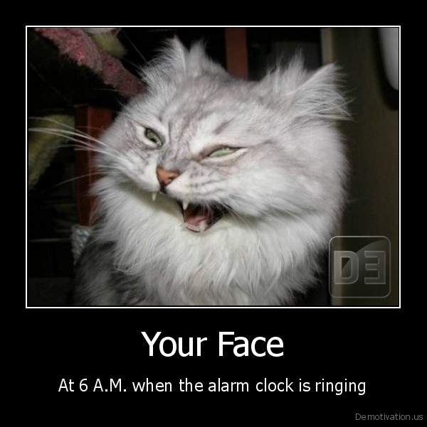 cat,morning,alarm, clock