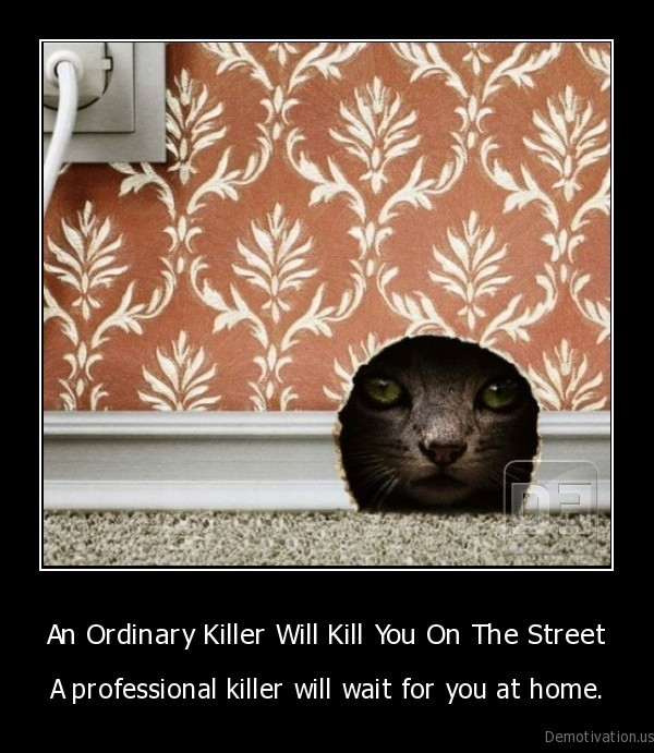 killer,professional, killer,cat,mouse,kitten,funny, cat, pictures
