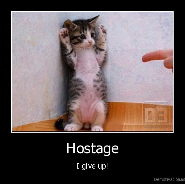 hostage,kitten,cat,funny, cat, pictures