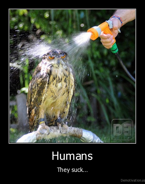 owl,funny, owl,washing, the, owl