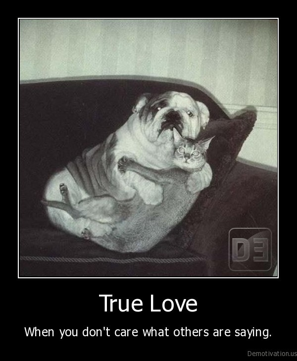 love,dog,cat,funny, pictures,funny, dog, pictures