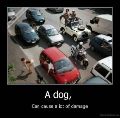 A dog,  - Can cause a lot of damage
