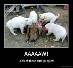 AAAAAW! - Look at those cute puppies!