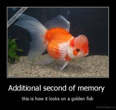 Additional second of memory  - this is how it looks on a golden fish