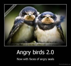 Angry birds 2.0 - Now with faces of angry seals