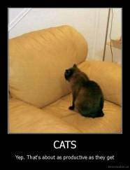 CATS - Yep. That's about as productive as they get
