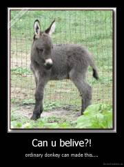 Can u belive?! - ordinary donkey can made this....