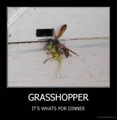 GRASSHOPPER - IT'S WHATS FOR DINNER