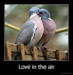 Love in the air -