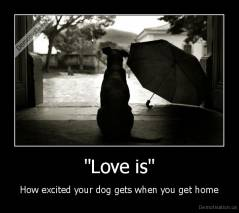 """Love is"" - How excited your dog gets when you get home"