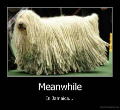 Meanwhile - In Jamaica...