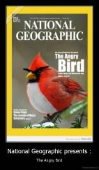 National Geographic presents : - The Angry Bird