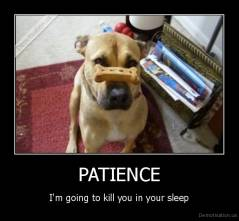 PATIENCE - I'm going to kill you in your sleep