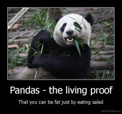 Pandas - the living proof - That you can be fat just by eating salad