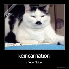 Reincarnation  - of Adolf Hitler