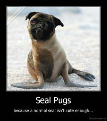 Seal Pugs - because a normal seal isn't cute enough...