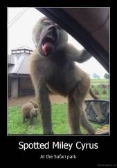 Spotted Miley Cyrus - At the Safari park