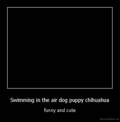 Swimming in the air dog puppy chihuahua - funny and cute
