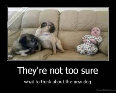 They're not too sure - what to think about the new dog
