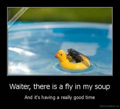 Waiter, there is a fly in my soup - And it's having a really good time