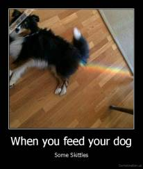 When you feed your dog - Some Skittles