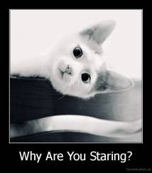 Why Are You Staring? -