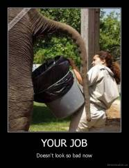YOUR JOB - Doesn't look so bad now
