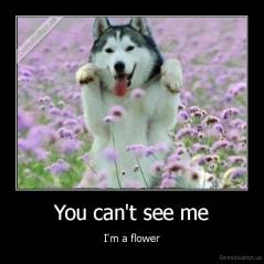 You can't see me - I'm a flower
