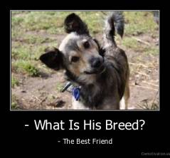 - What Is His Breed? - - The Best Friend