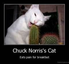 Chuck Norris's Cat - Eats pain for breakfast